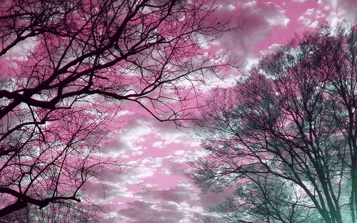 pictures desktop pink trees sunset shadow wallpaper sky color colour green colors silhouette clouds creativity photo skies colours image screensaver crystal photos turquoise unique background widescreen creative picture images christian creation backgrounds writer write create wallpapers capture pinksky breastcancer silhouetted desktopwallpaper hotpink screensavers irfanview 1610 1440x900 writes 1680 1680x1050 desktopwallpapers turquoisegreen widescreenwallpaper greatergood 10millionphotos crystalwriter christianwriter 1610aspectratio