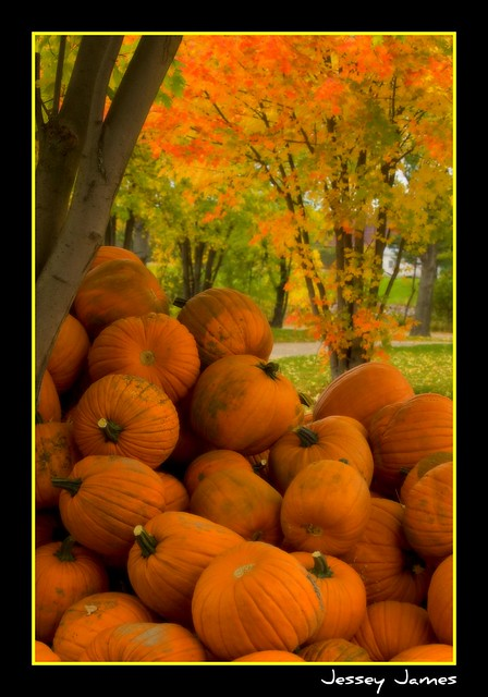 Pumpkins from the Leisure Farm, Sturgeon Falls in Northern Ontario Canada