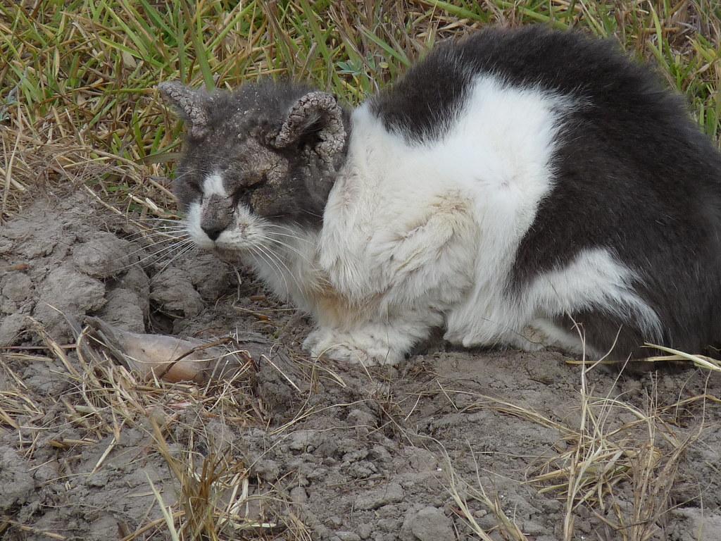 sick stray cat