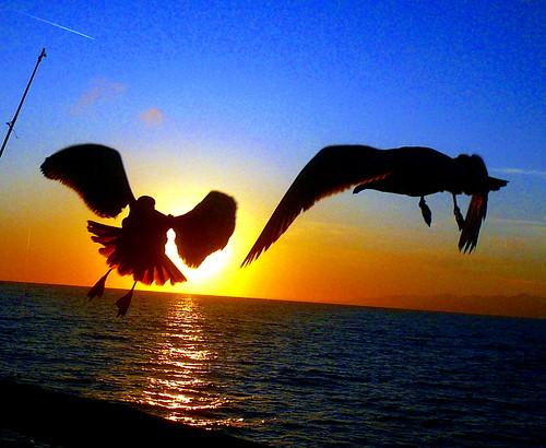 ocean sunset sky sun seagull gull platinumheartaward fbdg bestofmywinners coth5