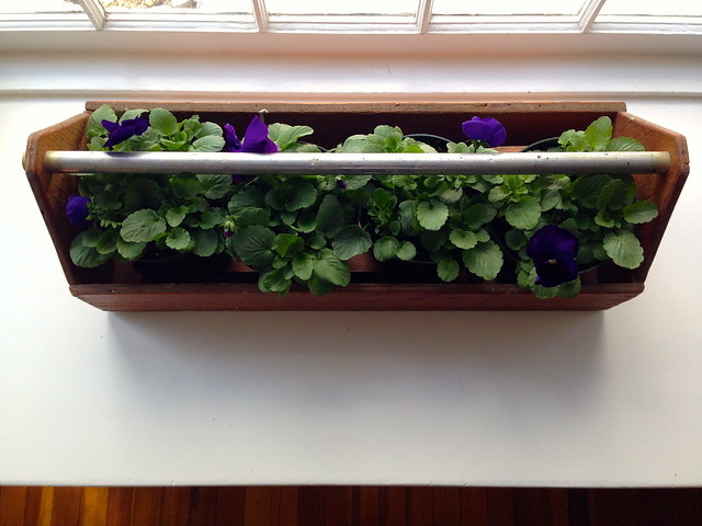 Pansies in an old tool caddy
