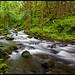 Gorton Creek by Casey Morris
