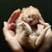 Bundle of joy by -ViDa-