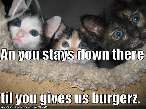funny-pictures-give-us-burgers