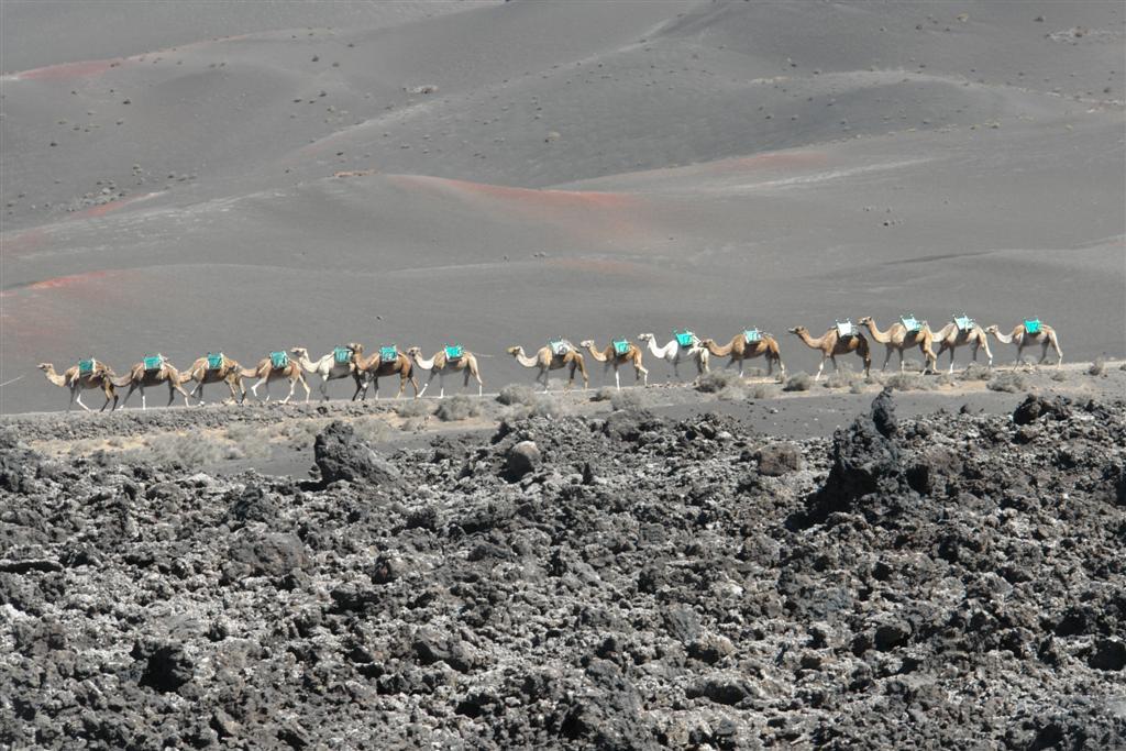 Camellos recorriendo parte del parque nacional de Timanfaya lugares que visitar en lanzarote - 2692487988 be43038a30 o - 5 increíbles lugares que visitar en Lanzarote