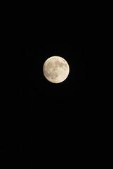 sky : August, 15 evening / moon yokohama