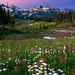 Tatoosh Range by Jesse Estes