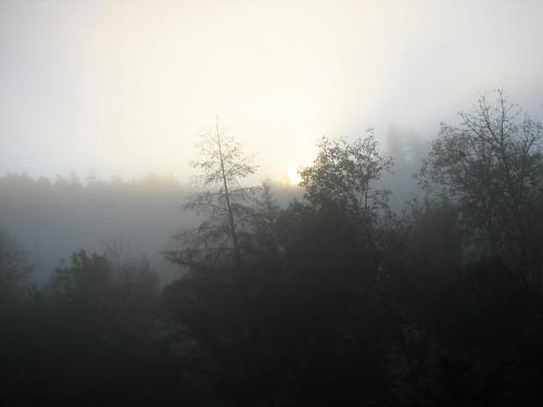 morning fog sunrise brooktrails