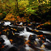 Bridal Veil Creek, Autumn Study #1