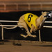 Coldwater Torres wins #98!! by greyhound rick