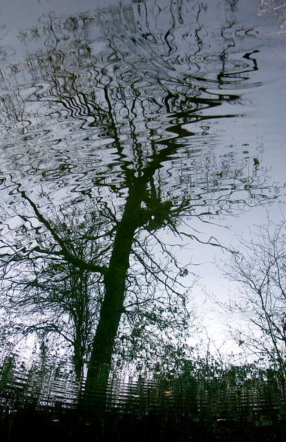 Canal Tree