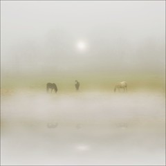 Horses through the mists