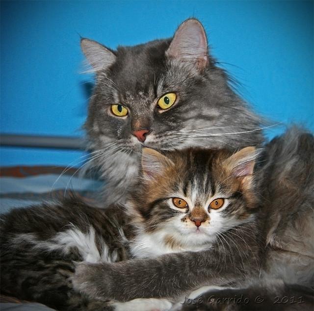lia y atila abrazados por fin mis dos gatitos se quieren y dan ...