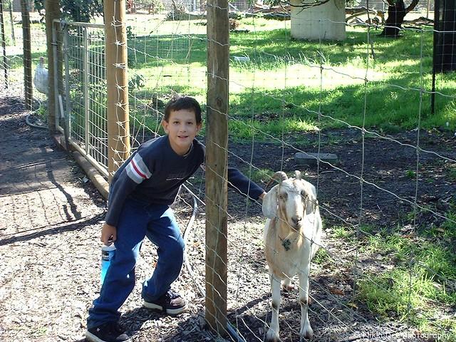 Ashley & Goat