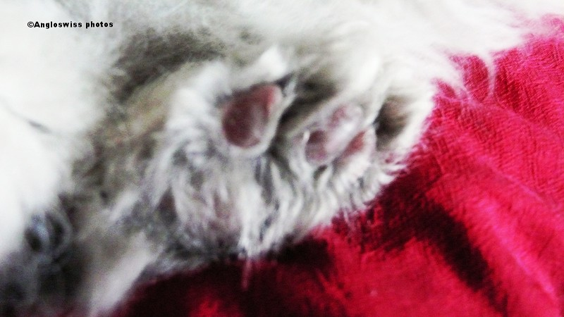 Fluffy's paw