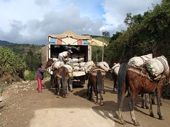 Loading the potato truck that will take us to Celendín
