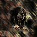 Rust the Bark by Isaac Leedom