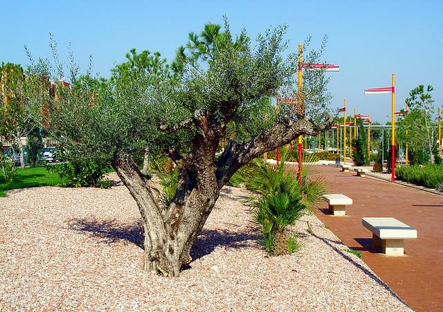 4080628152 38d7132014 for Arboles de jardin de hoja perenne