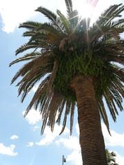 palm city, miyazaki