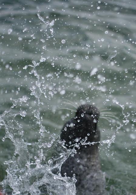 Header of A Bigger Splash
