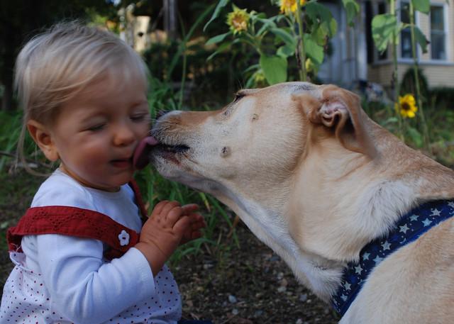 Dog Gives Kisses To Little Girl Msn