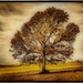 Timeless Tree by Jeff Clow