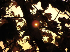 sun and leaves