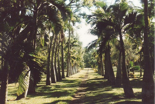 Pamplemousses Botanical Gardens. Photo by http://www.flickr.com/photos/mwanasimba/ CC by SA