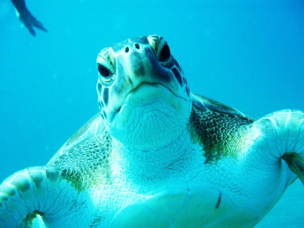 Underwater explorations!