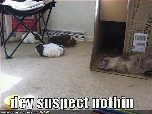 unsuspecting hamster kitteh