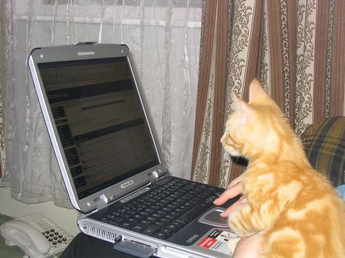 What no LOLcats? (1)