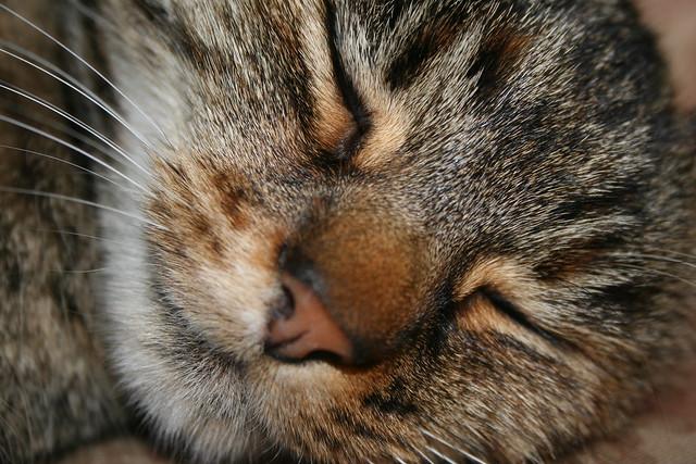 Kitty - Cat
