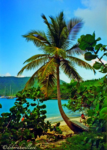 travel blue trees friends vacation seascape green beach nature water flora stjohn palm foliage palmtrees tropical 200views lush 1001nights soe fronds usvi mahobay supershot tropicaltrees tropicallandscape mywinners abigfave anawesomeshot colorphotoaward isawyoufirst citritgroup theunforgettablepictures betterthangood theperfectphotographer goldstaraward caribbeanflickrgroup flickrsexquisiteshots colourvisions rubyphotographer lustaufphotos deborahwillard deborahwillarddesign newenvyofflickr dragonflyawards flickrclassique