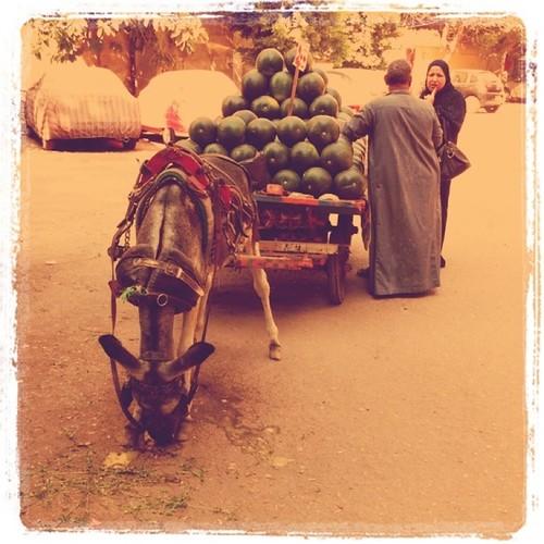 Donkey kart