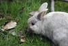 White Rabbit by Edward Kaye