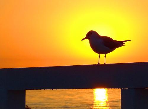 sea sky silhouette sunrise poland sopot