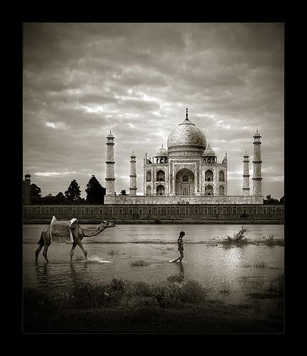 india architecture river landscape asia taj mahal tajmahal agra camel duotone fav yamuna sigma1020 450d الهند تاجمحل epiceditsselection