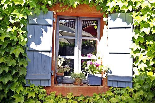 Fenêtre sur nature