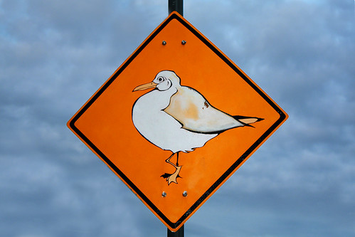 Beware of fat seagulls!