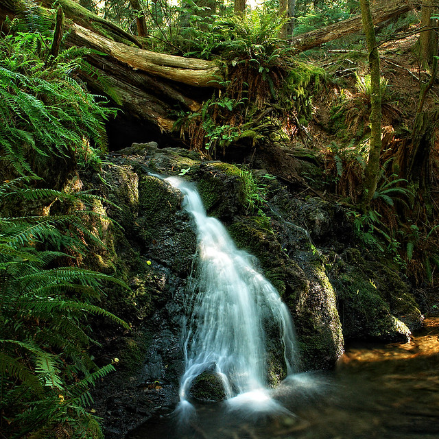 Language In 45 And 47 Stella Street: Waterfall, Moran State Park, Orcas Island