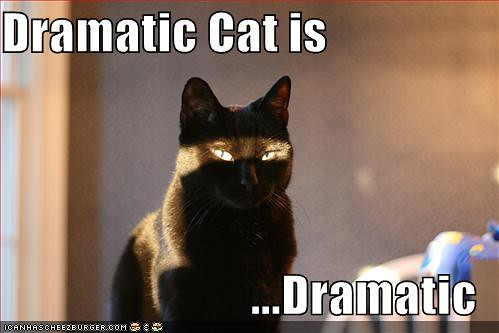 3059099609 c4abc59abb funny cats a 010