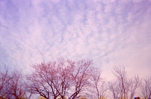 camera trees sunset urban chicago film clouds gold iso800 kodak disposablecamera damaged expired 800 disposable rogerspark expiredfilm damagedfilm xrayedfilm xrayed gold800