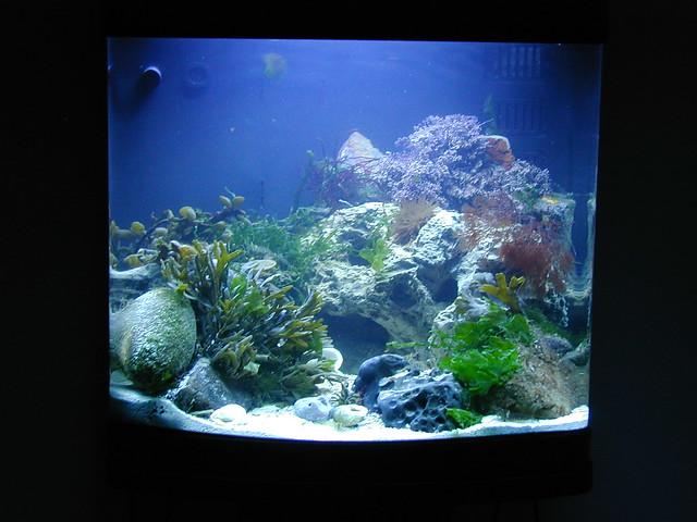 Orca 450ltr marine nano aquarium flickr photo sharing for Aquarium nano marin