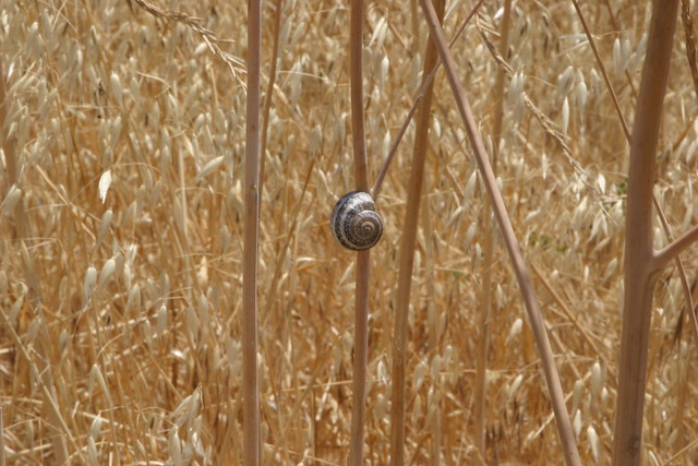 snail in the grasses