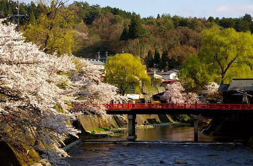 bridge flowers trees sunset panorama rio japan river puente atardecer tramonto arboles arbres vista pont cherryblossom sakura nippon takayama nihon japó hida vespre riu miyagawa chubu japón cirerers 高山市 cerezos lifetravel