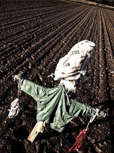 Day 280 / 365: Vogelscheuche - Scarecrow