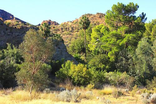 arizona landscape superior boyce magma boycethompsonarboretum boycethompson magmaridge onlythebestare jhaskellus jhaskell jackhaskell