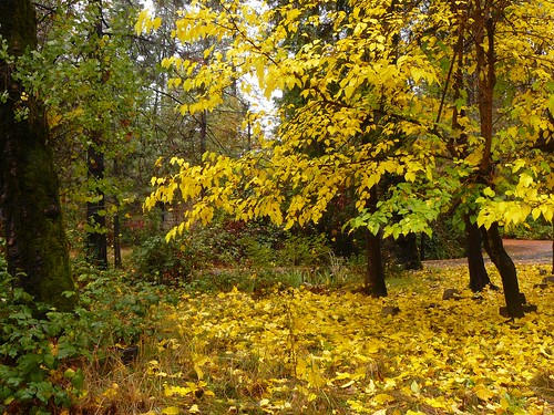 fall fallcolors califorina berrycreek leavesyellow lakemadrone