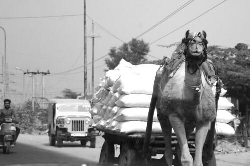 jodhpur-family 091.jpg