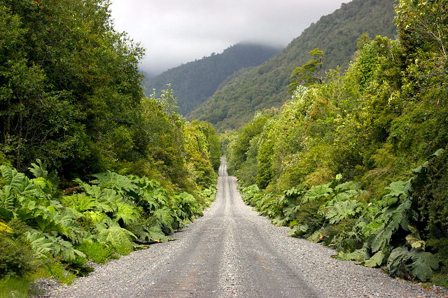 PATAGONIA, CHILE: Carretera Austral, crossing Pumalin Park.